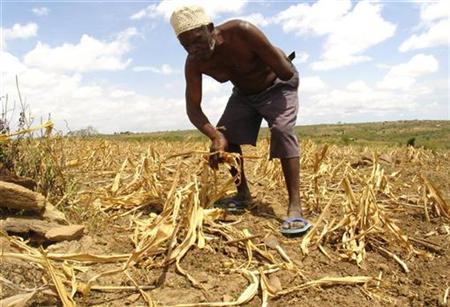 african corn farmer